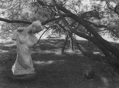 Из цикла «Волшебный садик». Фото Йозефа Судека, 1954-1959 г. © Josef Sudek/Anna Fárová
