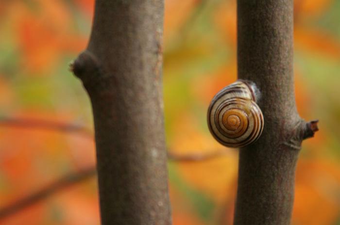 Подборка дня: осень в деталях