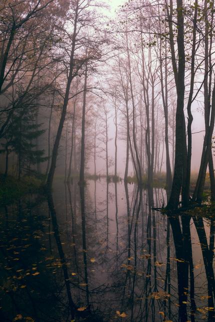 Как снимать туманный пейзаж?