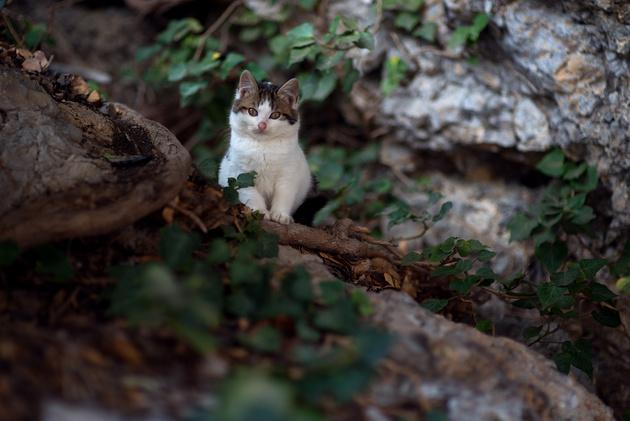 Почему стоит сфотографировать бездомного котика?
