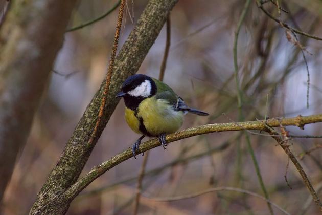 Как снимать птиц в парке?