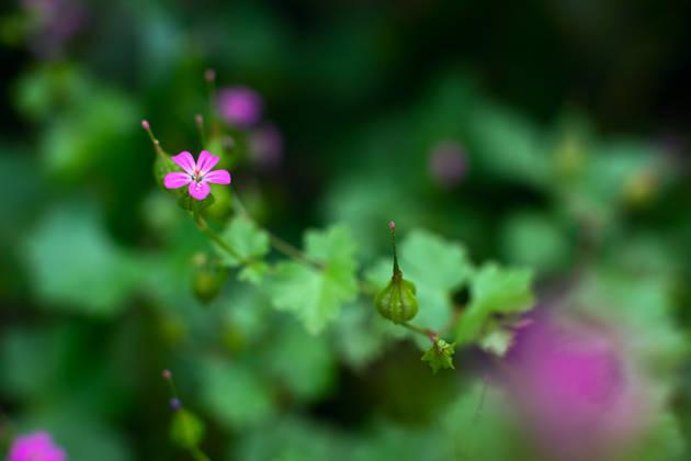 Как снимать цветы крупным планом?