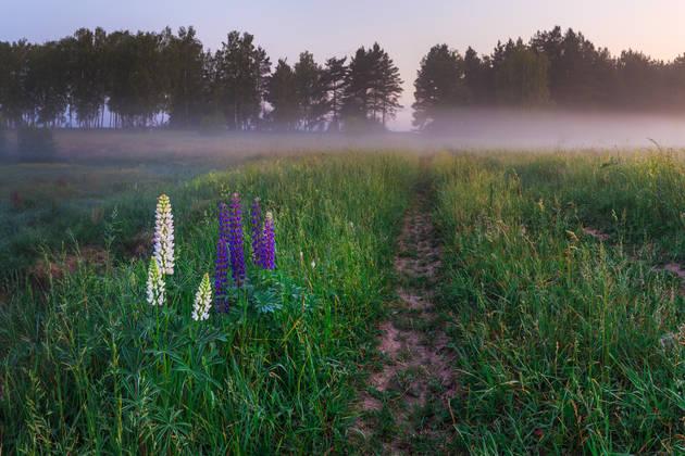 Пейзаж: цветы на переднем плане