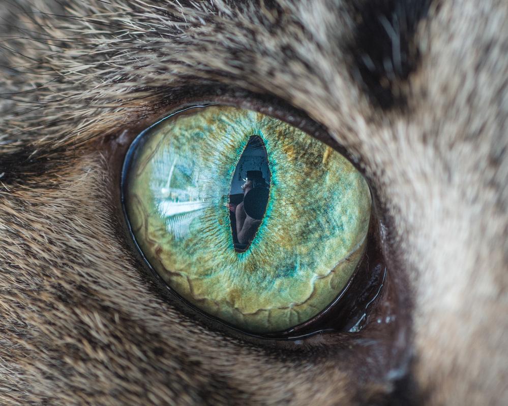 Как сделать глаза как у кошки макияж Визаж и здоровье глаз 95