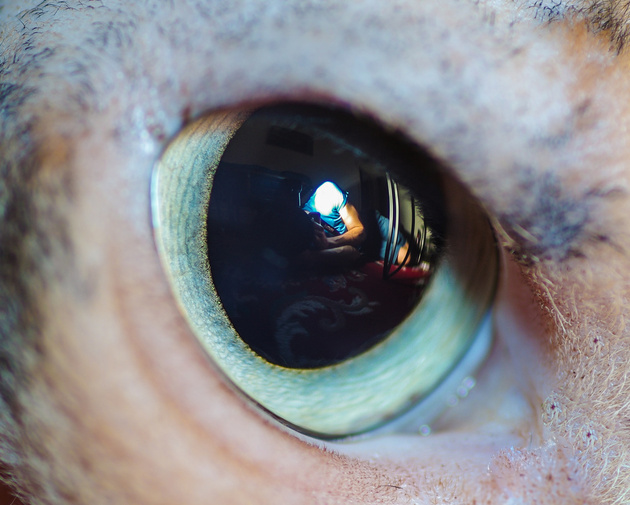 Кошачьи глази