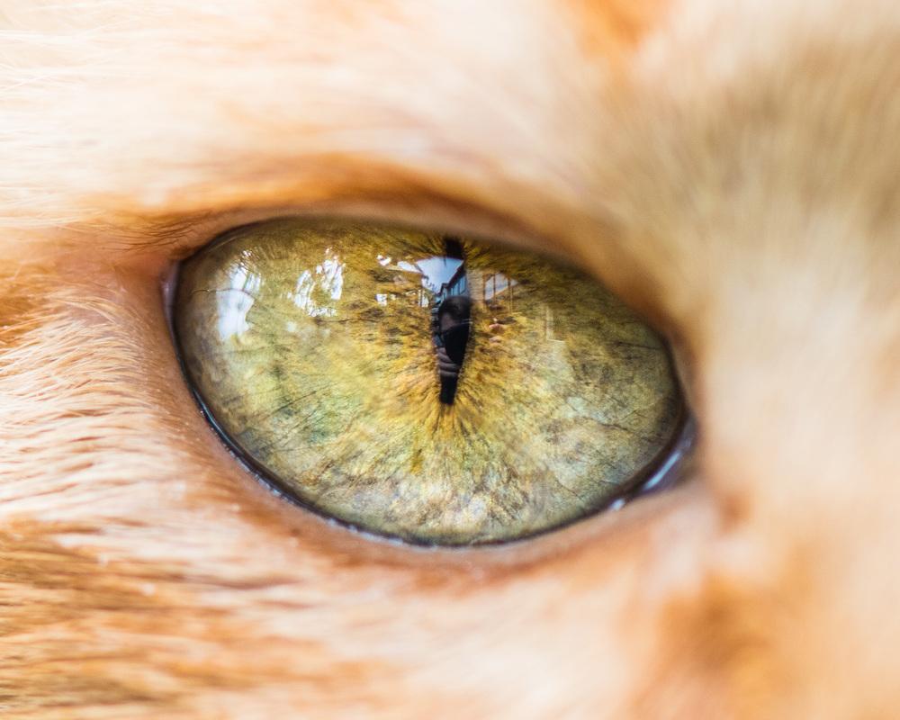 Как сделать глаза как у кошки макияж Визаж и здоровье глаз 62