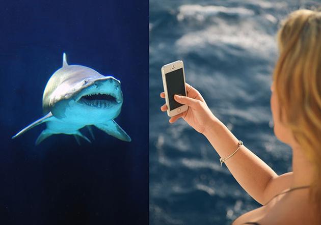 От селфи погибает больше людей, чем от акул