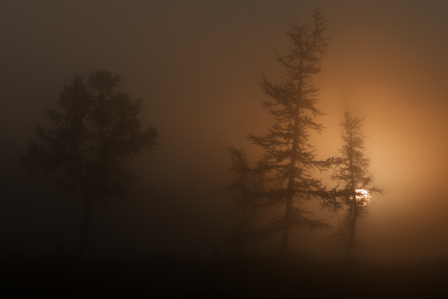 «В тумане»