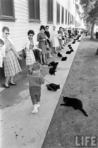Кастинг на роль черного кота