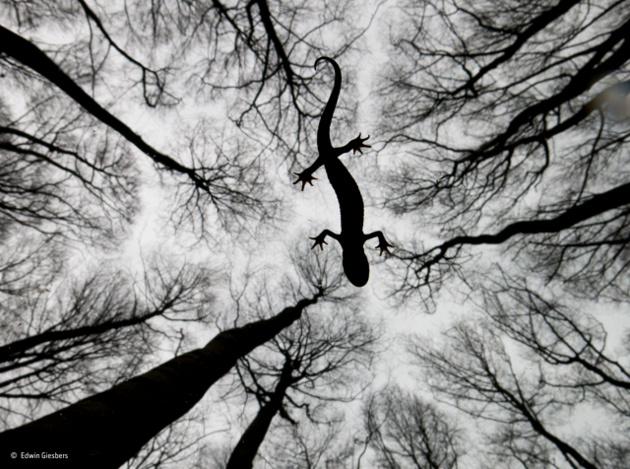 Итоги конкурса Wildlife Photographer of the Year 2015