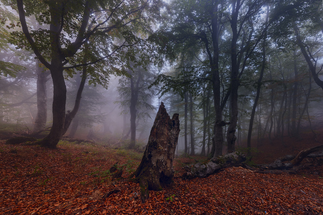Осенние туманы в кадре
