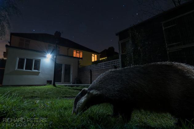 Дикая природа на заднем дворе дома