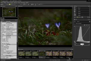 6 продвинутых функций Nikon Capture NX-D, которые пригодятся фотографу