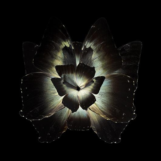 Коллажи из цветов и бабочек Себа Жаньяка