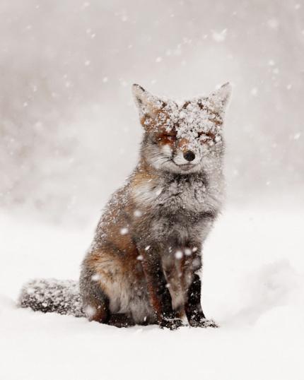 Животные, которые радуются снегу так же, как люди