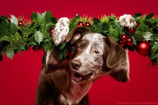 Собаки, которые желают вам счастливого Нового года