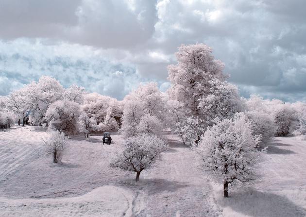 Инфракрасные пейзажи Пшемыслава Крука