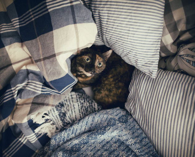 Истории одной кошки
