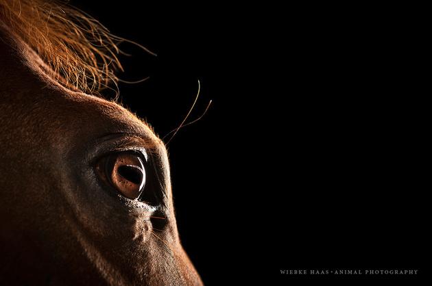 Вибке Хаас —«лошадиный фотограф»