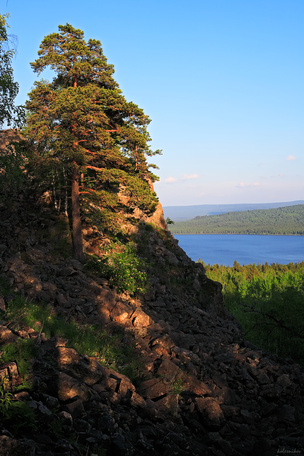 Зелёное царство в центре России
