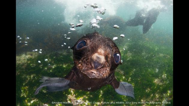 Андрей Нарчук — лучший фотограф России по версии SWPA