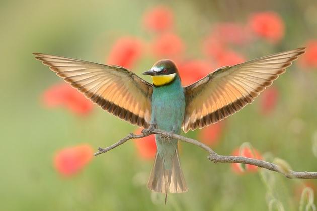Мир птиц Радослава Цветкова