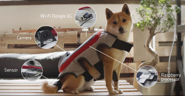С этим жилетом собака может сама делать фотоснимки и отправлять их в Facebook