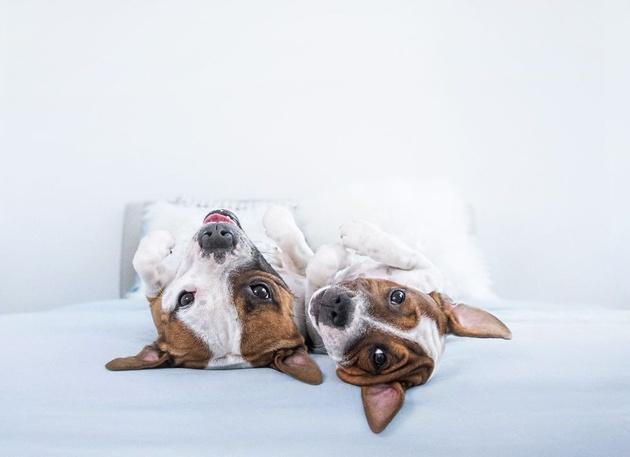 Лапы вверх! Собаки Серены Ходсон