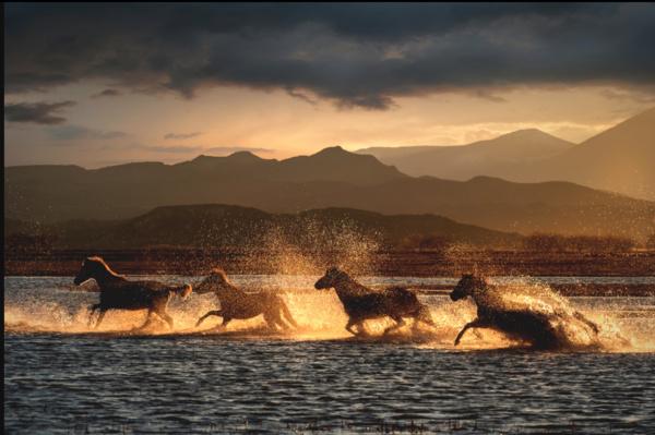 Лошади Хусейна Таскина