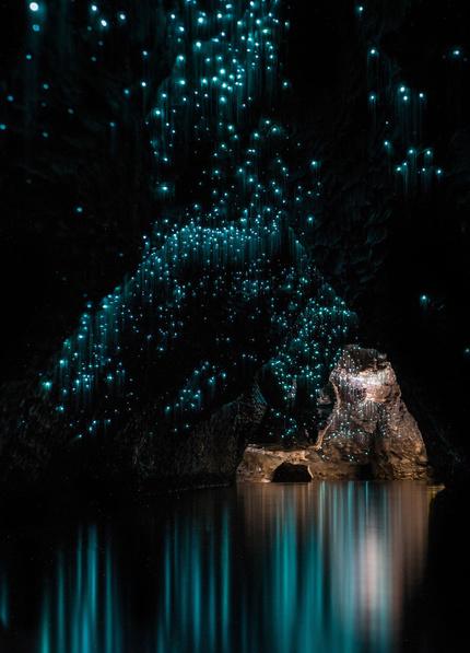 Чудо природы — пещера Глоуворм в Новой Зеландии