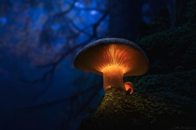 Светящиеся грибы Мартина Пфистера