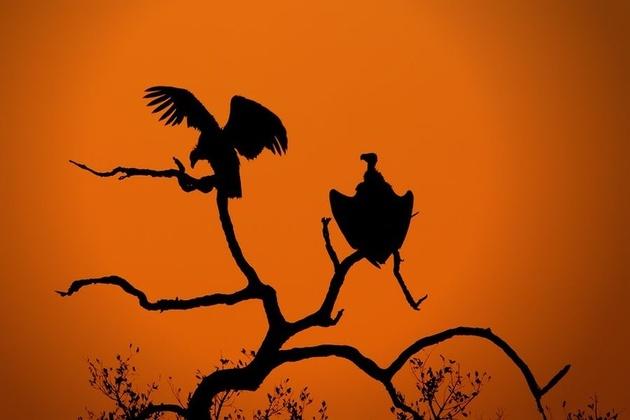 Силуэты дикой Африки