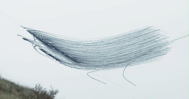 Хави Боу: птицы, какими вы их еще не видели