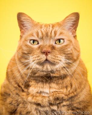 Очень толстые коты в проекте «Fat Cats»
