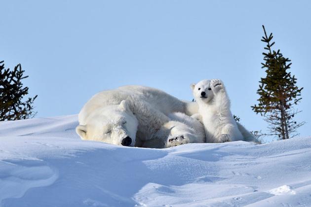 Опубликованы финалисты конкурса Сomedy Wildlife Photography Awards