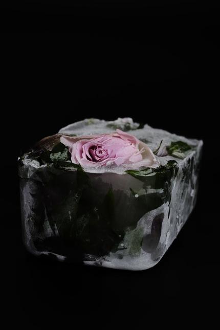 Яна Манишевиц: замороженная красота