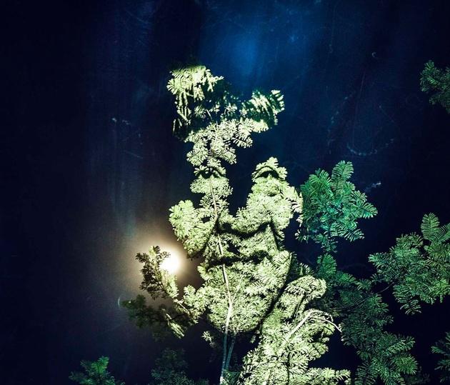 «Лица на деревьях» Давида Эшара