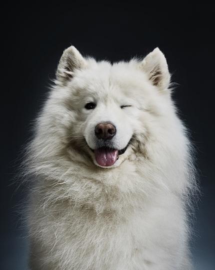 Как снимать животных: кто и зачем фотографирует собак?