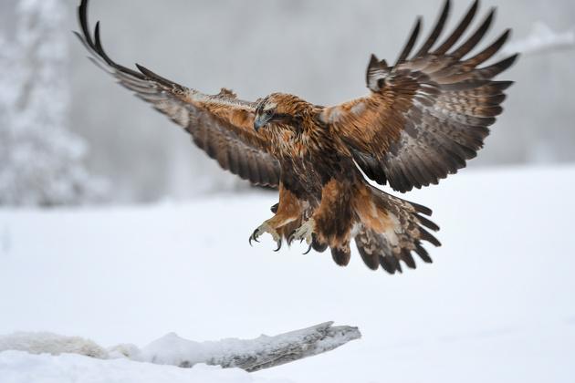 Фотограф Сергей Горшков о Nikon D5