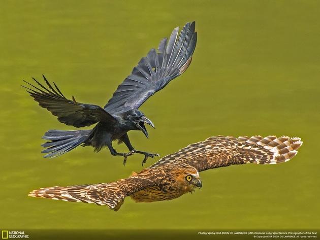 Объявлены победители конкурса National Geographic Nature Photographer of the Year