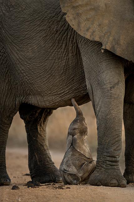 Remembering Elephants – фотокнига, которая поможет слонам