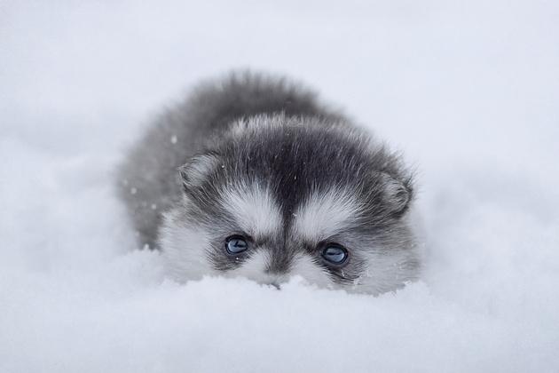 Съёмка животных зимой
