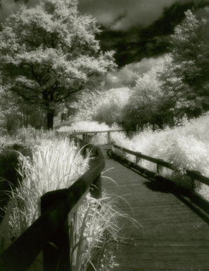 Wandsworth Common in infra-red © pentin