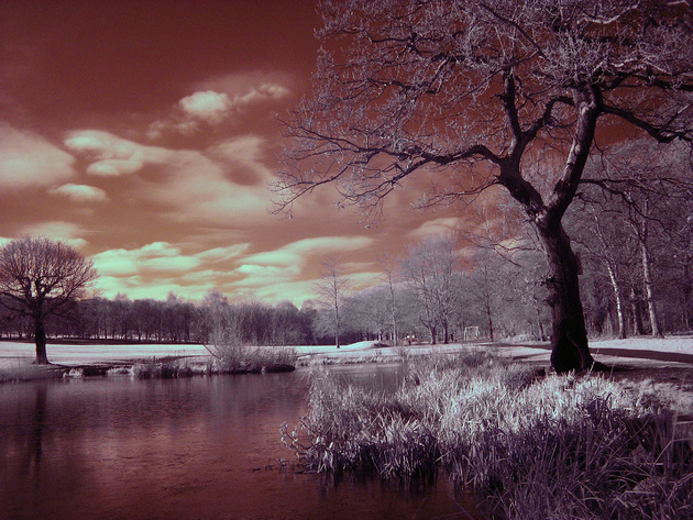 Infra Red @ Middleton Park, Leeds © photo zoom