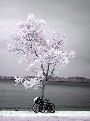 Infra Red at Pasir Ris Park © 83871985@N00