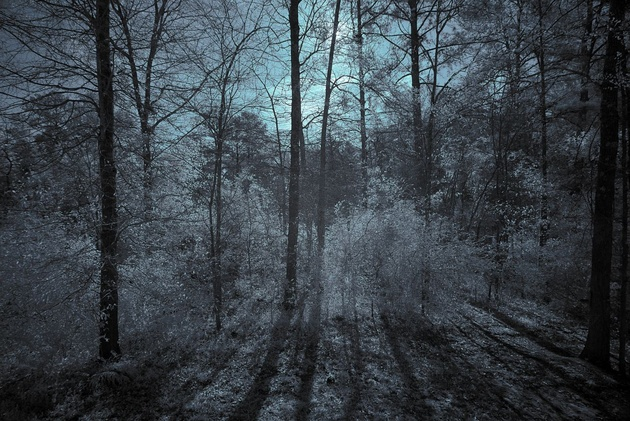 Woods in the Morning Infra red color © revisions