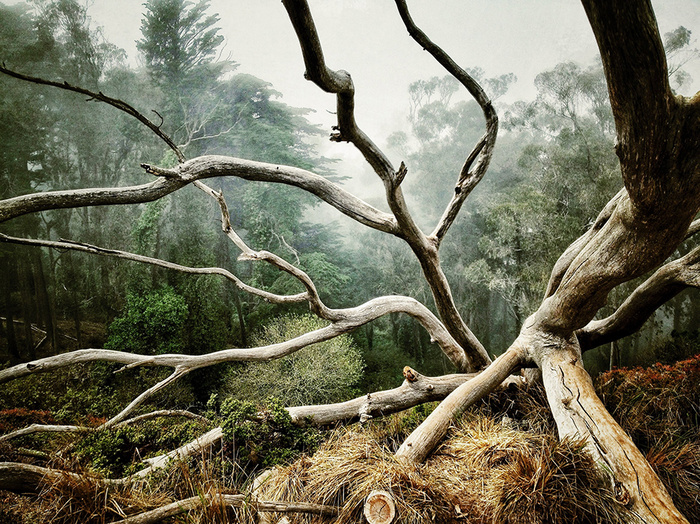 © AARON PIKE San Francisco, CA United States 1st place - Trees