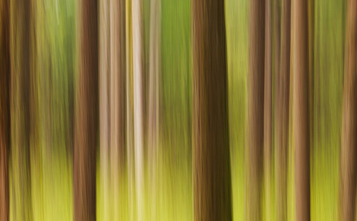 Spring Forest Abstract. Columbia River Gorge, Oregon, USA