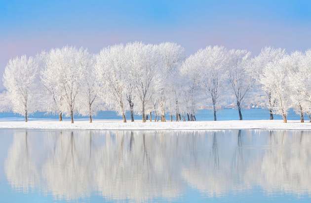 Winter trees covered with frost © laurentiu iordache