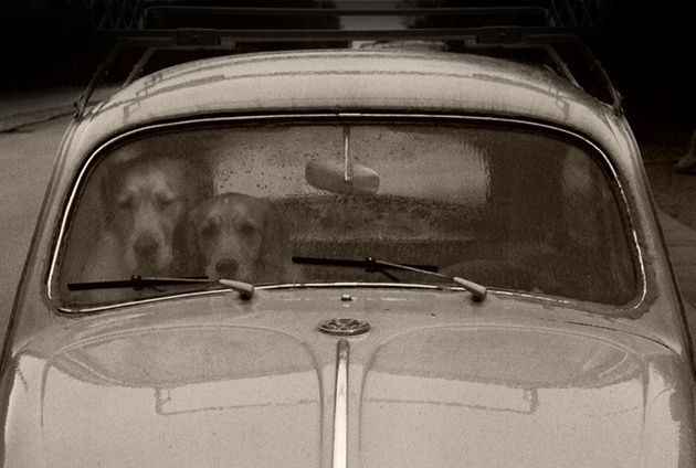 Dogs stuck in a VW © Helle